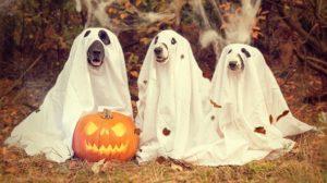 halloween jelmez