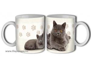 Brit cica, cicás ajándék